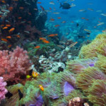 Faszinierende Unterwasserwelt
